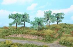 5 Olivenbäume 8-11 cm         NH2019