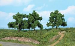 3 Obstbäume 13 cm             NH2019