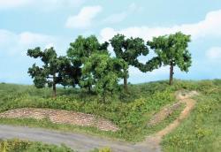 5 Obstbäume 8-10 cm           NH2019