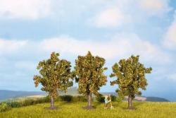 Apfelbäume, 3 Stück                            Spur_N (Z)