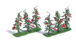 H0  6 Tomatenpflanzen H0          NH2016        [UVP  13.99]